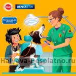Бесплатная проверка зубов у собаки
