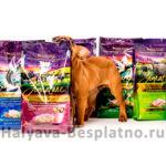 Бесплатный образец корма для собак ZIgnature